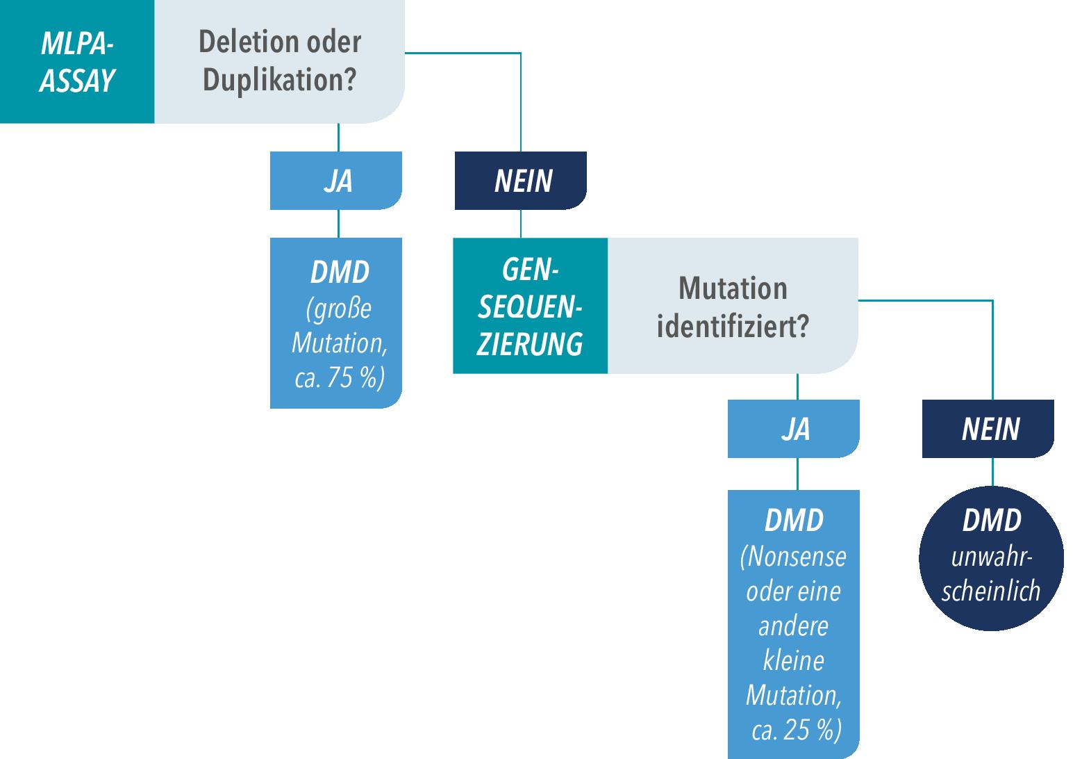 Wann besteht Verdacht auf DMD - Muskelschwund